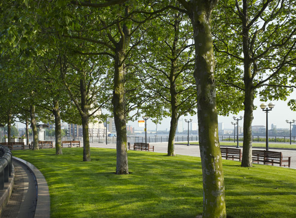 Canary wharf trees