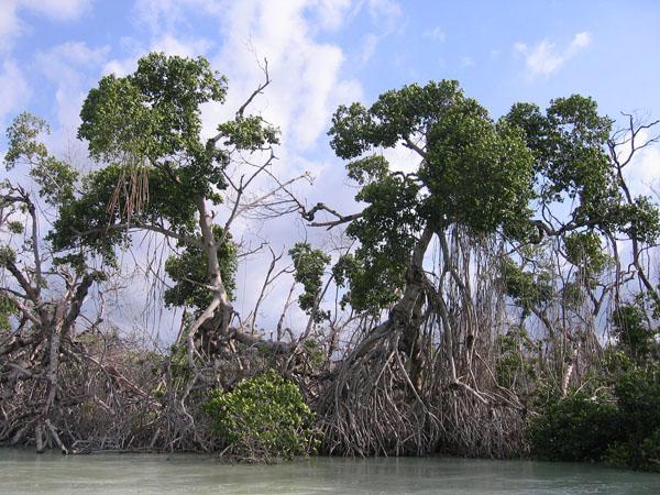 schmitz_mangroves2016