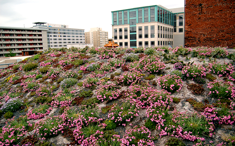 Green Roof South Wave