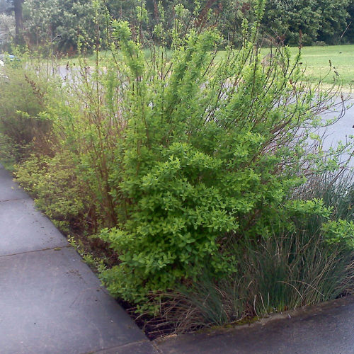 Performance-Based Plant Selection for Bioretention