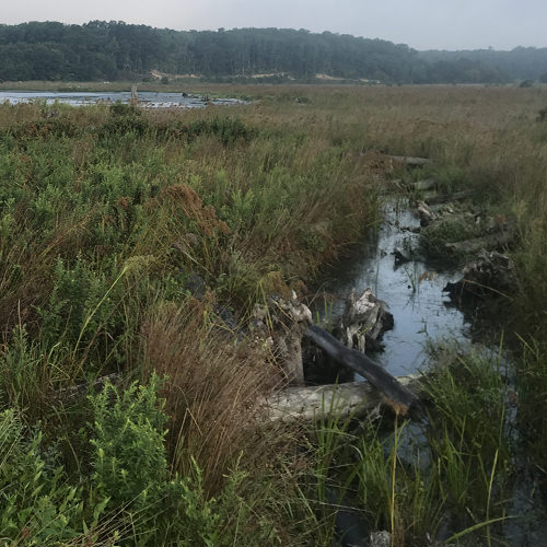 Transformative Ecological Restoration