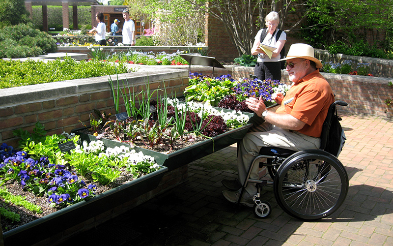 A man in a wheelchair wheels under a raised planting bed during a teaching exercise on horitcultural therapy.