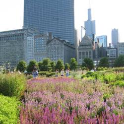 Adult-Stress-Lurie-Garden.jpg