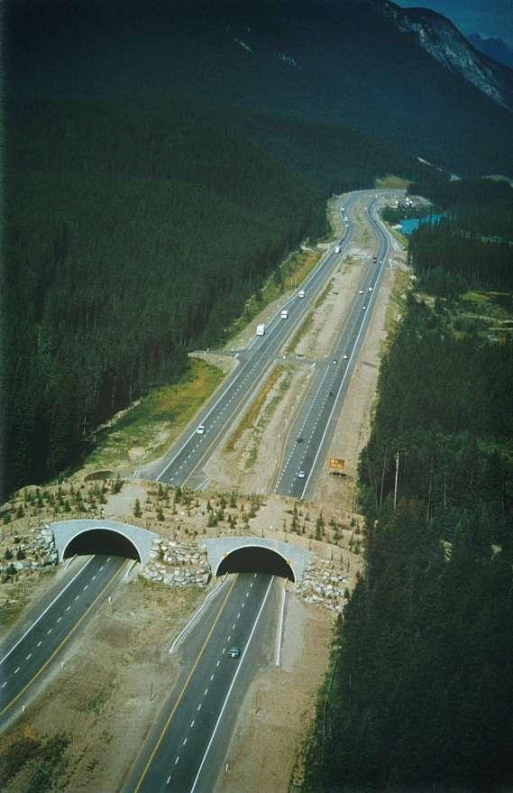 wildlife-crossing