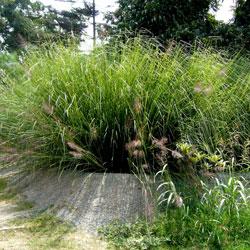wetlands - constructed wetlands